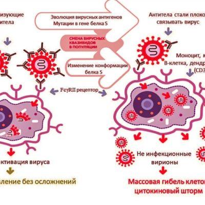 Иммунопатологии Th2 типа и антитело зависимое усиление